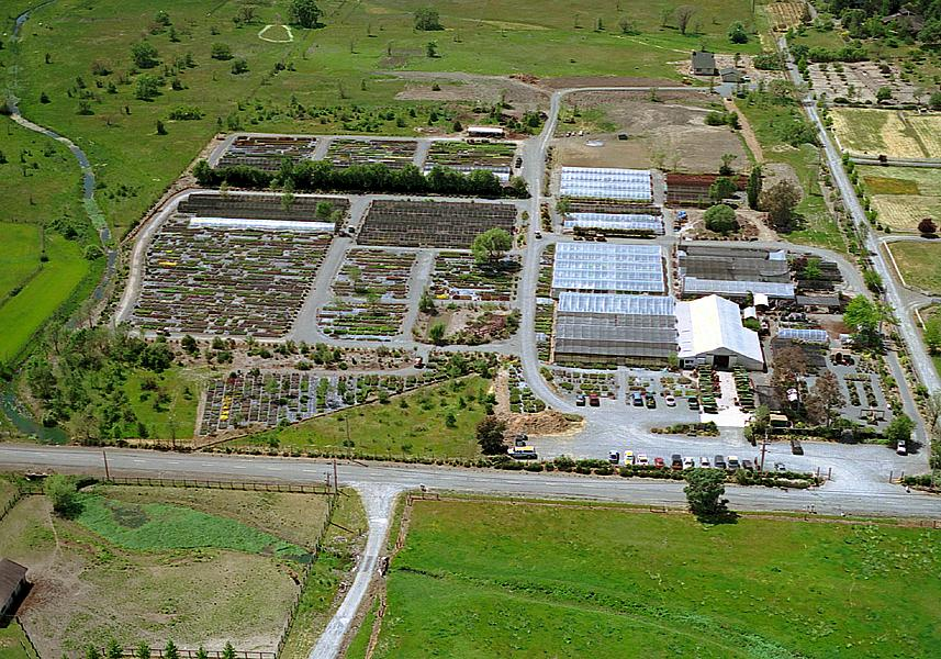 emerisa gardens wholesale nursery