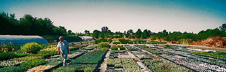 emerisa gardens wholesale nursery sonoma county