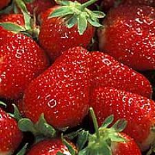 FRAGARIA x ananassa 'Eversweet' (Strawberry), Eversweet Strawberry