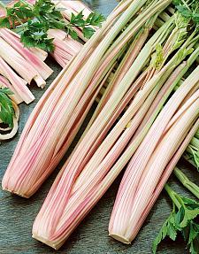 CELERY 'Peppermint Stick', Organic Celery