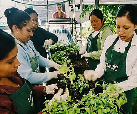 emerisa gardens wholesale nursery plant production